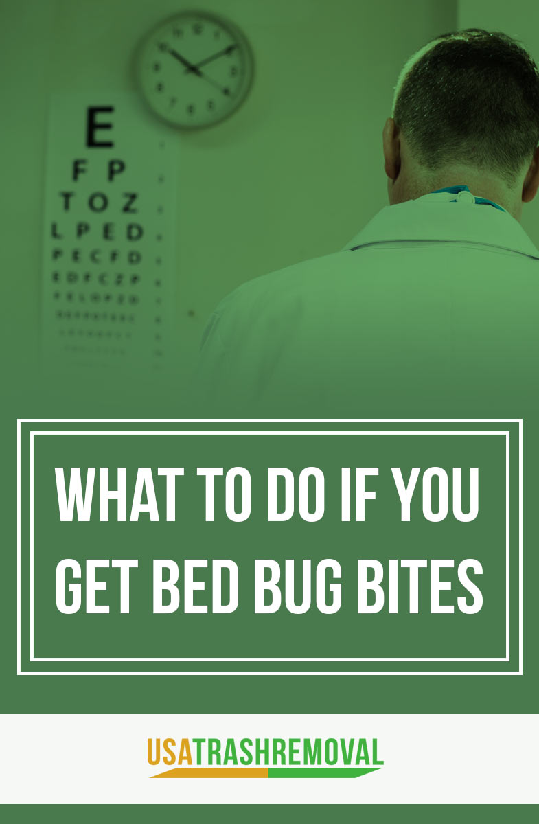 What To Do If You Get Bed Bug Bites